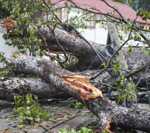 Risky Business – Cyclones, Insurance embargos and nervous buyers